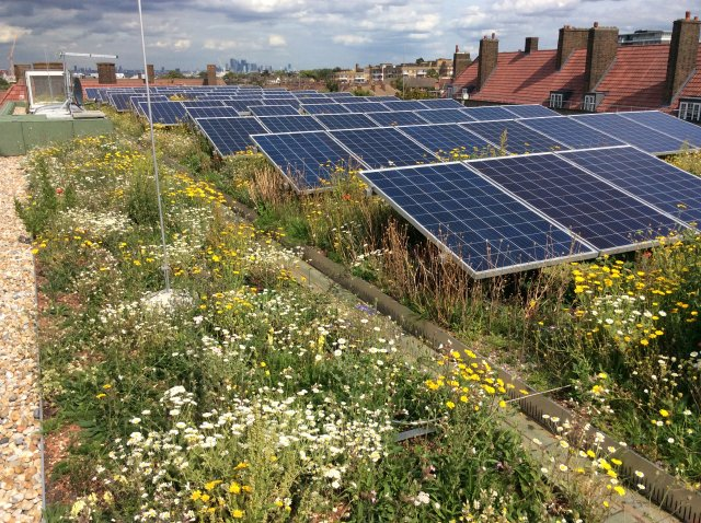 green roof award winner - Bauder Streatham Hill