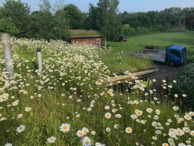 Small green roof - Hilldrop Essex