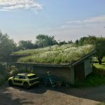 Small green roof guide – the Essex property that started it all