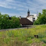 Native plants on green roofs reduce building management costs