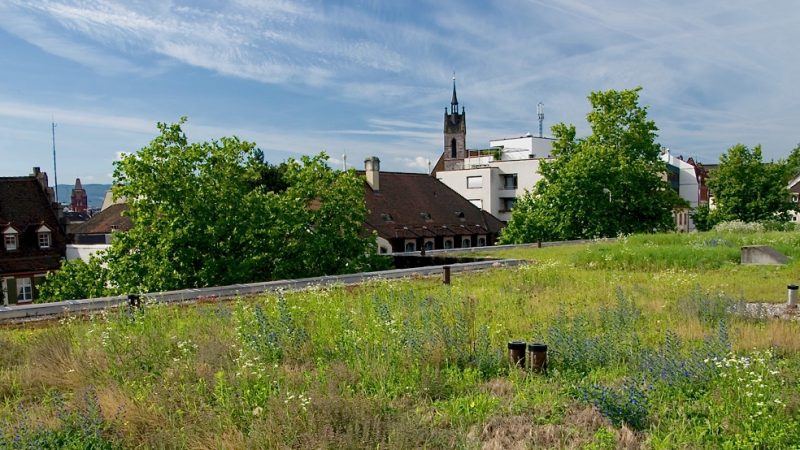 Native plants - biodiverse green roof Switzerland