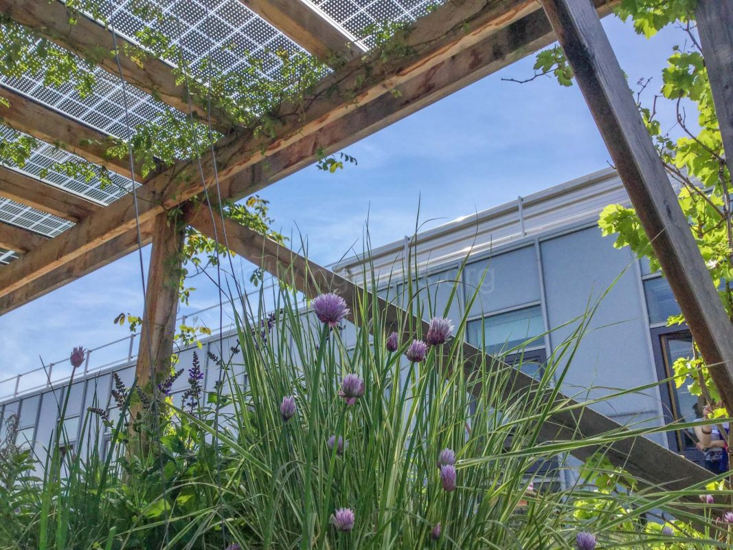 Biosolar Green Roofs Combining Solar Panels And Green Roofs