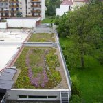 Brno provides €780,000 for green roofs