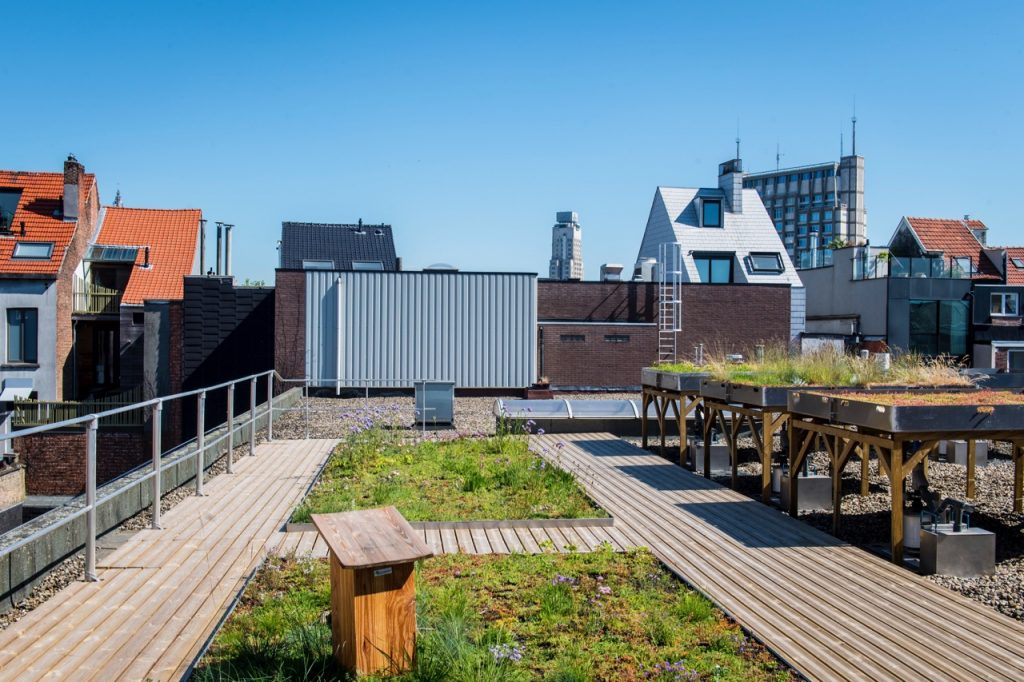 blue green roof - Antwerp